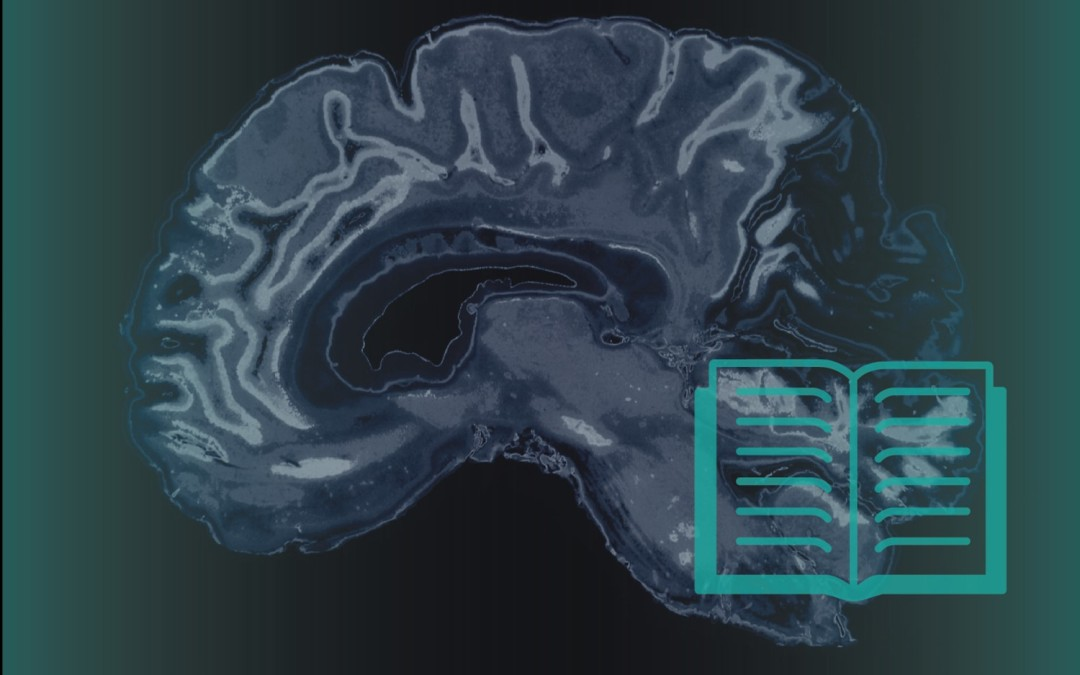 A UConn study of how the human brain reads has implications for teaching and improving reading skills.